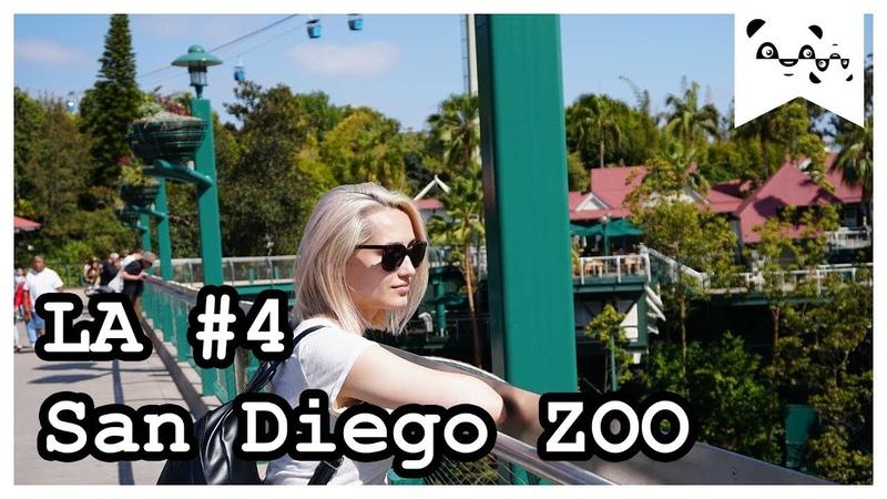 Зоопарк Сан-Диего | Suspicious Pandas in California | Episode 4