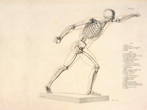 Височно нижнечелюстной сустав строение, функция, кровоснабжение, иннервация