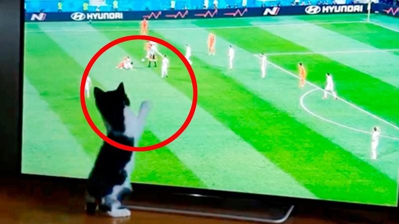 Этот котенок играет в Футбол лучше наших Футболистов: Не веришь ? Убедись САМ