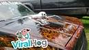 Scary Skull Scoop El Camino || ViralHog