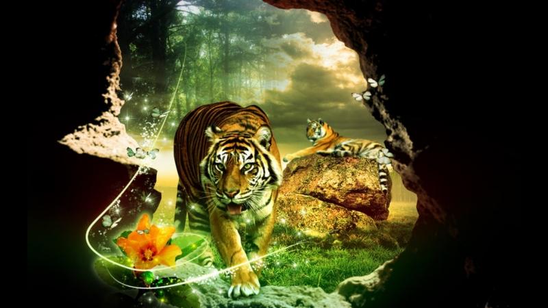 Shere.Khan - I Am Tiger Tribute
