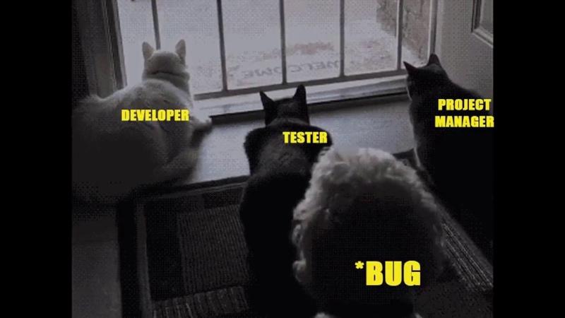 Wen Suddenly A Bug Enter In a Program While Finalization |Reactions| Developer|Tester|PM