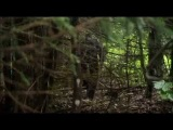 Ultimate Survival Bear Grylls Shelter / Выжить любой ценой Беар Гриллс Укрытие