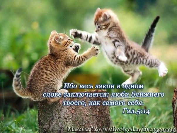 Следствие в РФ пошло ва-банк. Савченко предъявят незаконный переход границы в пятницу, - Фейгин - Цензор.НЕТ 9057