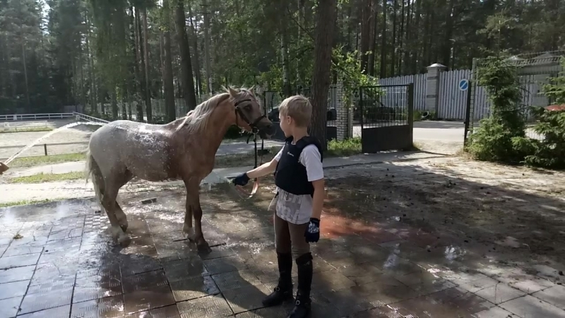 купание желтого коня