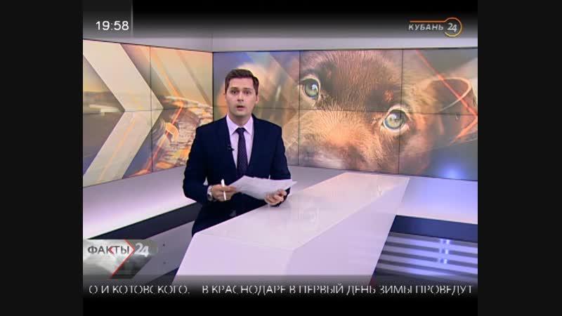 Строительство приюта для животных в Краснодаре, котенок за 340 тыс. , корм для животных от молодоженов!