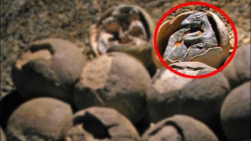 Сенсационная НАХОДКА русских ученых! Обнаружены яйца древних динозавров! Когда они вылупятся!