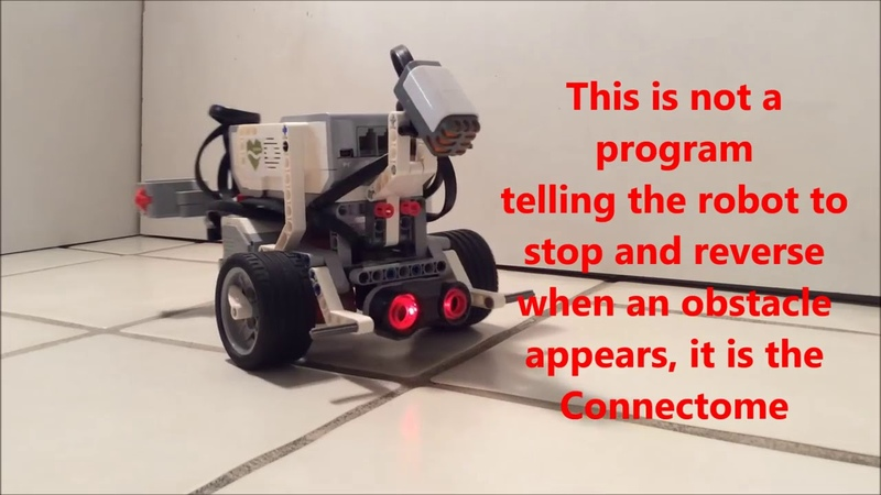Оцифрованный мозг червя в роботе