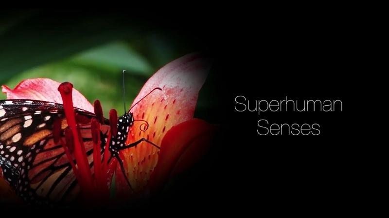 Super Sentidos - Cap5 -Sentidos Sobre Humanos