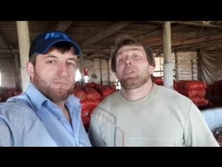 Подкололи Халка из Чечни и Кирилла синтола [Нетипичная Махачкала] (суета)