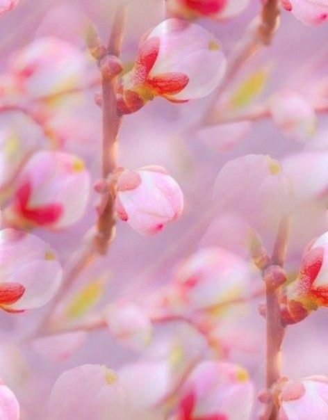 Цветочные и растительные фоны - Страница 3 F7M1YJkxBao