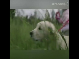 Собака оставляет вас только один единственный раз!