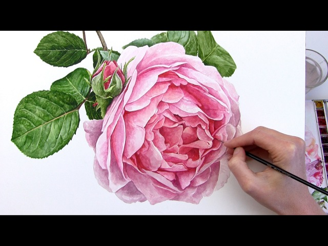 How to paint a realistic rose flower in watercolour
