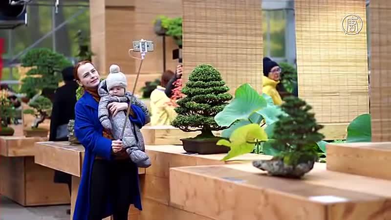 Выставка бонсай в Москве