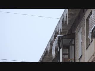 Малолетних живодеров под суд, изнасилование на вписке и наркотический танец. Отдел происшествий 11.01.2019. Невские новости