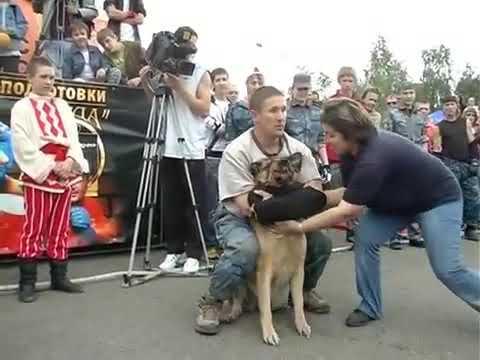 показательный бой с собакой