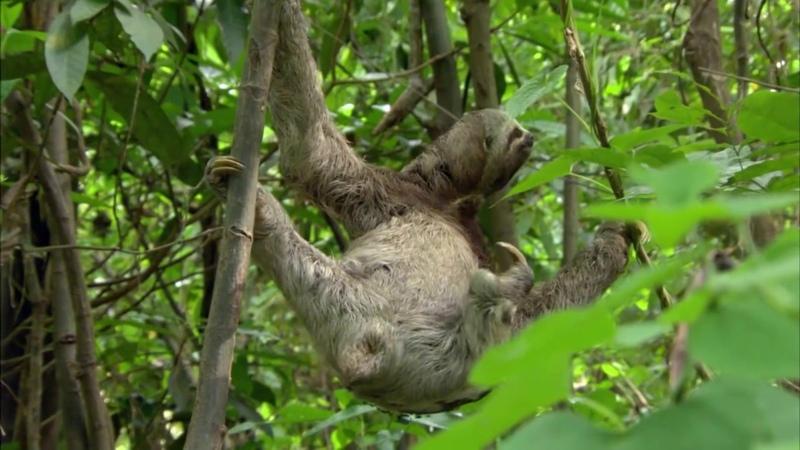 В дебрях Латинской Америки Амазонка