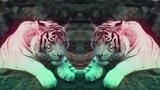 Benny Benassi &amp SOFI TUKKER - Everybody Needs A Kiss (Official Video) Ultra Music