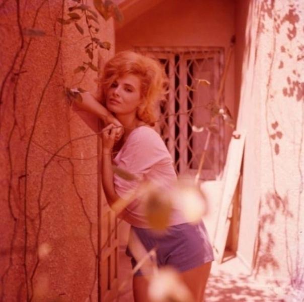 Подборка фото двойника Софи Лорен итальянской актрисы Шилла Габель. Фото 1950-х