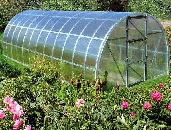 Что можно и нельзя сажать в теплице Известно, что в одной теплице нельзя выращивать томаты и огурцы, потому что у них разные требования к температуре и влажности воздуха. Но для одной