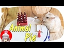 Hamster Eating Animal Pie With Coca-Cola | Hamster Kitchen And Hamster House | Love-Hamster