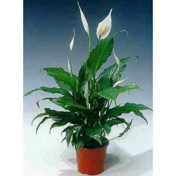 домашних растений фото