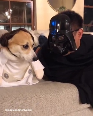 I'm your father. · coub, коуб
