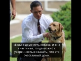 Том Харди и его любовь к собакам