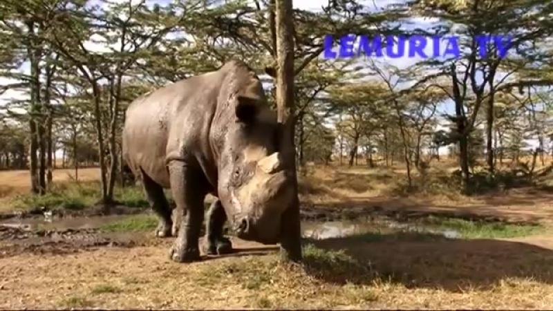 Northern White Rhinos at Ol Pejeta