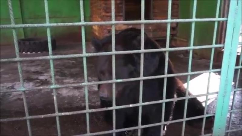 Праздник пробуждения медведей отметили в Комсомольском зооцентре «Питон»