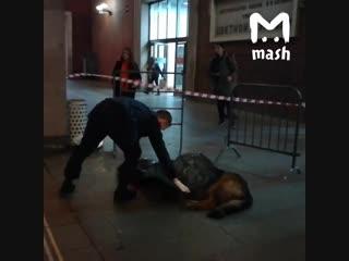 Полицейский застрелил собаку в метро