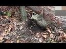 Спасение попавших в беду диких животных