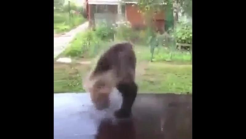 Кота нет......... Но есть прыгающий и радостный медведь
