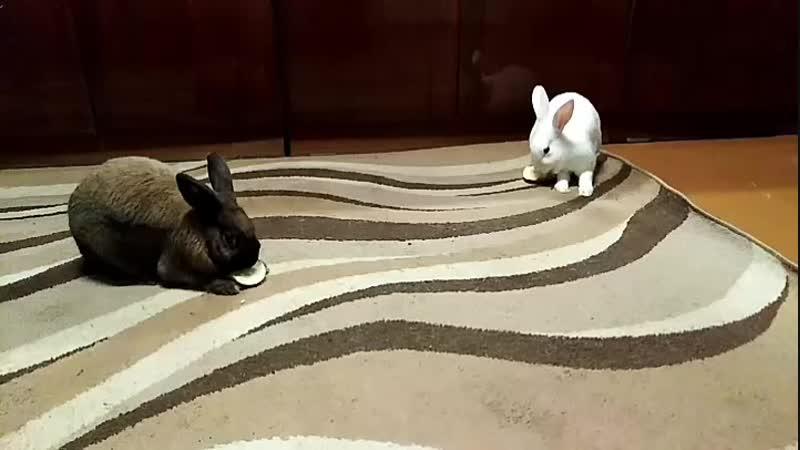 Кроличий ужин