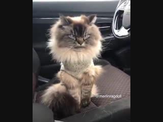 Котик не доволен новым свитером :)