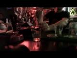 Loc Dog - Секс и виски, кокс карибский