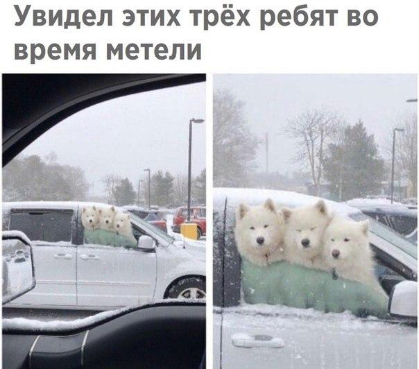 Фото №456265196 со страницы Анастасии Боровиковой