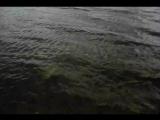 Река, ветер, ласточки, и я) Для Саши