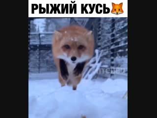 Кусь (6 sec)
