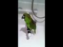 А-а, крокодилы бегемоты...А-а, и зелёный попугай!