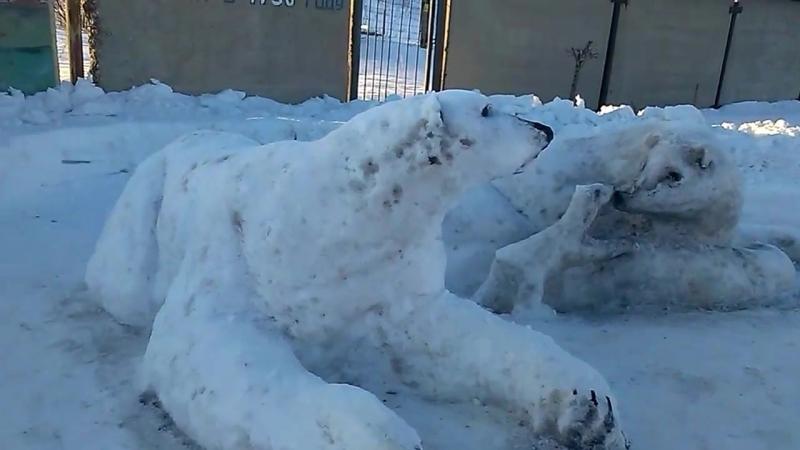 Белые медведи в городе Polar bears in the city