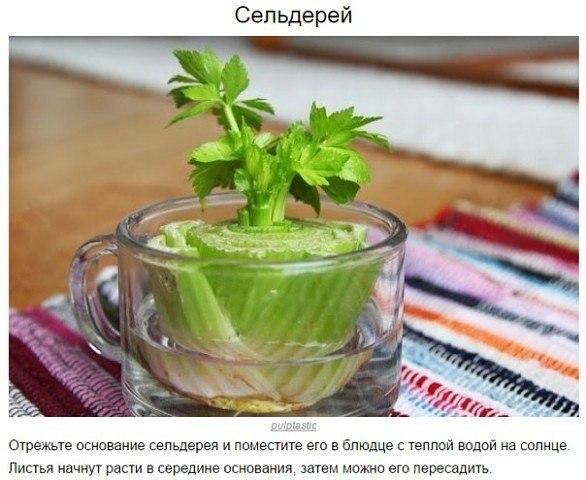 8 овощей, которые можно выращивать дома всегда