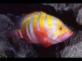 Top 10 Most Expensive Tropical Fish