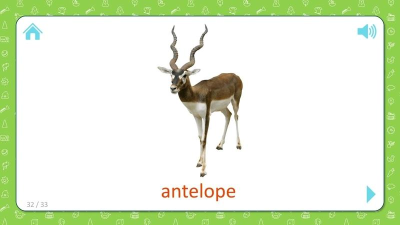 Antelope - Wild Animals - Flashcards for Kids