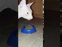 Кошка сфинкс ЕСТ сухой корм