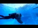 Дайвинг с Дельфинами 2