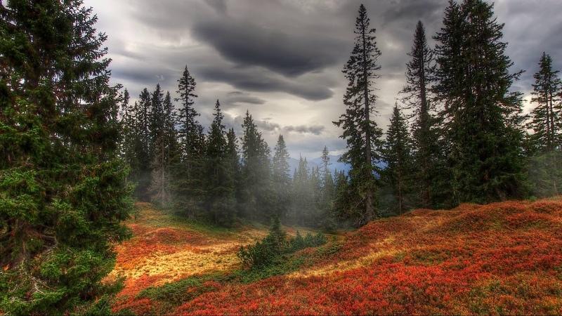 Картинка природа. Деревья, осень, туман, лес. Foto natura. Arburi, autunno, nebbia, foresta