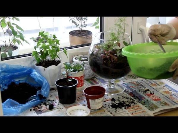 Бутылочный садик или флорариум для растений. [Надежда и Мир]