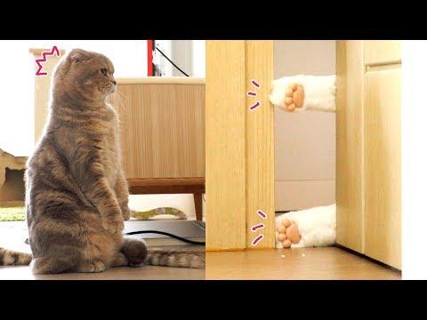 [몰래카메라] 방 안에 무서운 고양이가 있다! - 가짜 발로 고양이 속이기