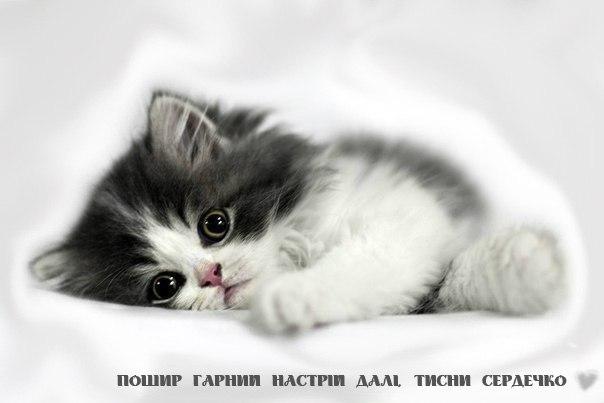 Маленький кіт і гарний настрй